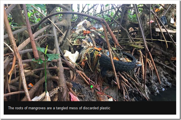 The roots of mangroves are a tangled mess of discarded plastic